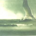 Tern Summer 1988
